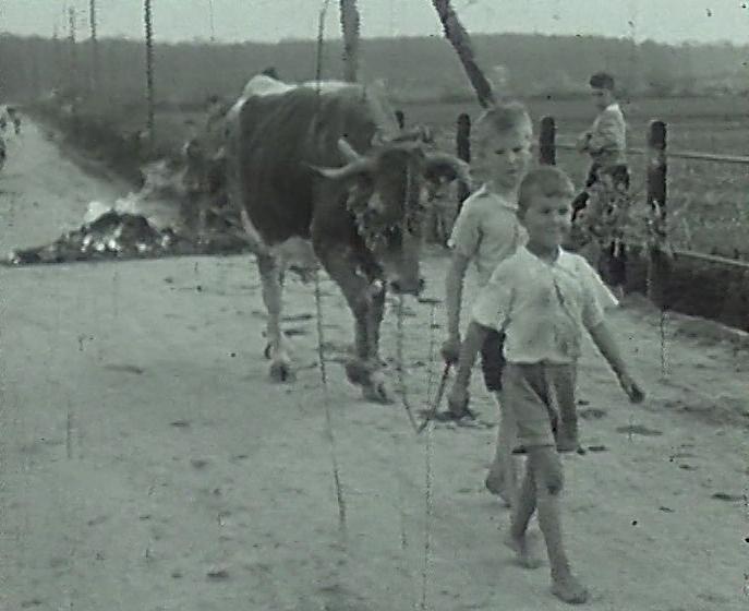 djeca,-krave,-jurjevo,-arhaicno,-prelaz-preko-krijesa
