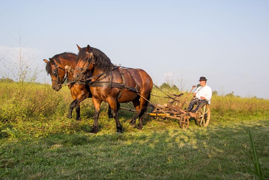kosci-za-kosce-konj-posavac-etno1-16.jpg