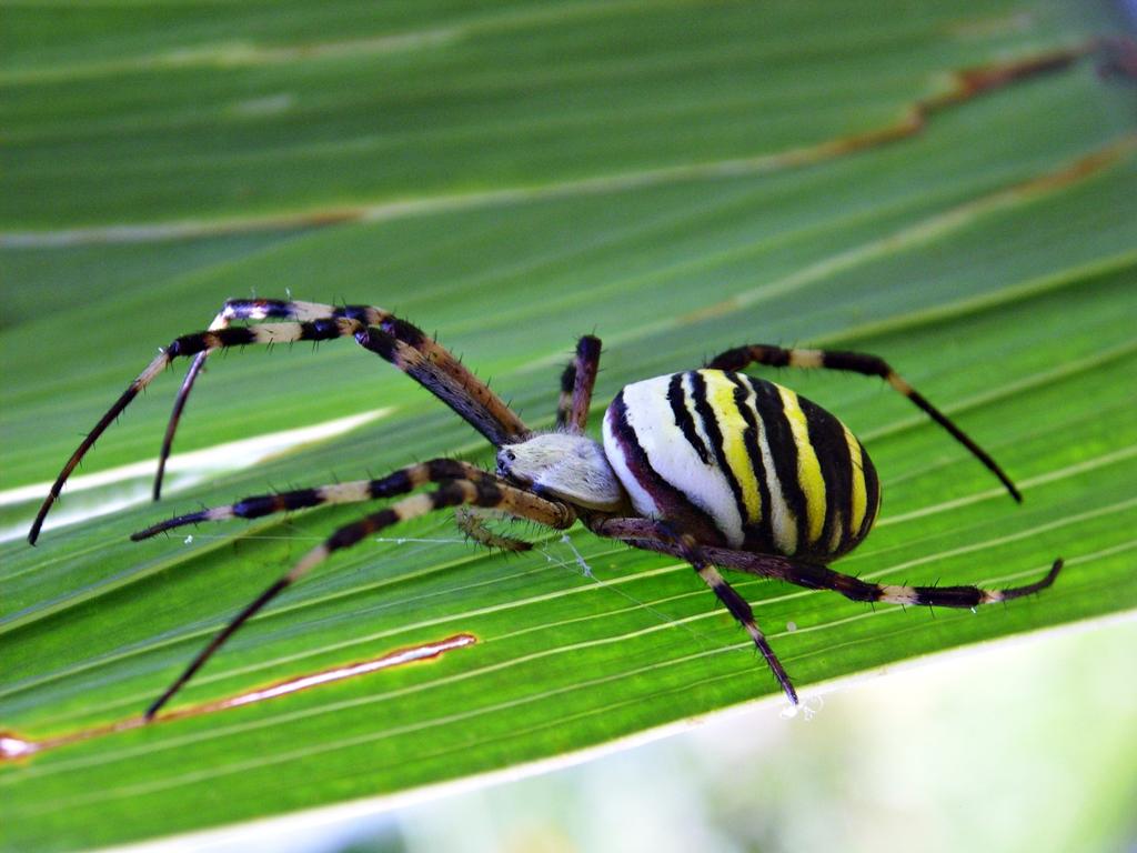 kukci-Dario-Drvodelic-35.jpg
