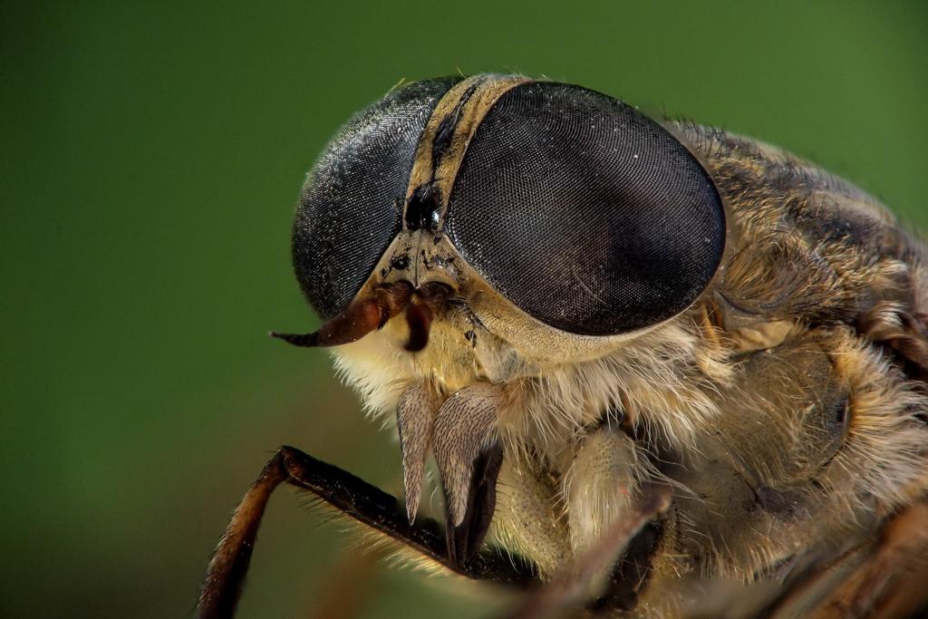 kukci-Dario-Drvodelic-40.jpg