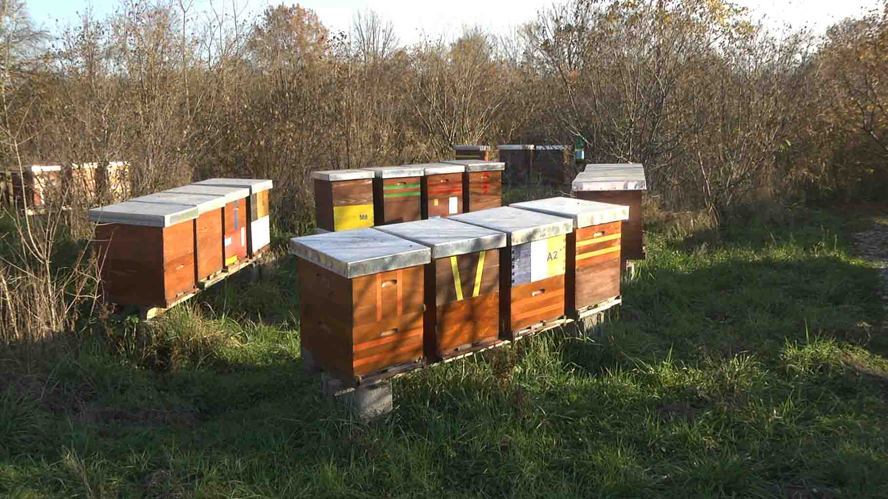 Pčelari košnice