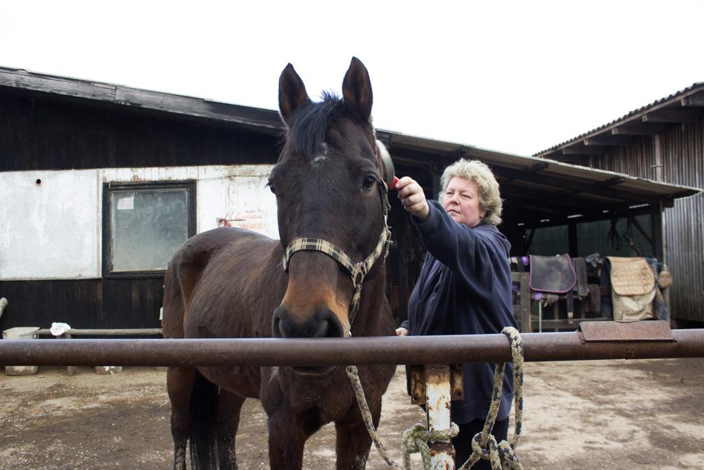 ranch_okuje_konji_koze_životinje_katd-10