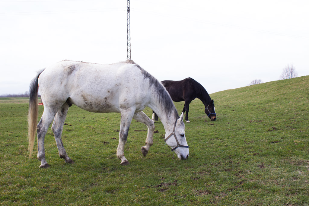 ranch_okuje_konji_koze_životinje_katd-25
