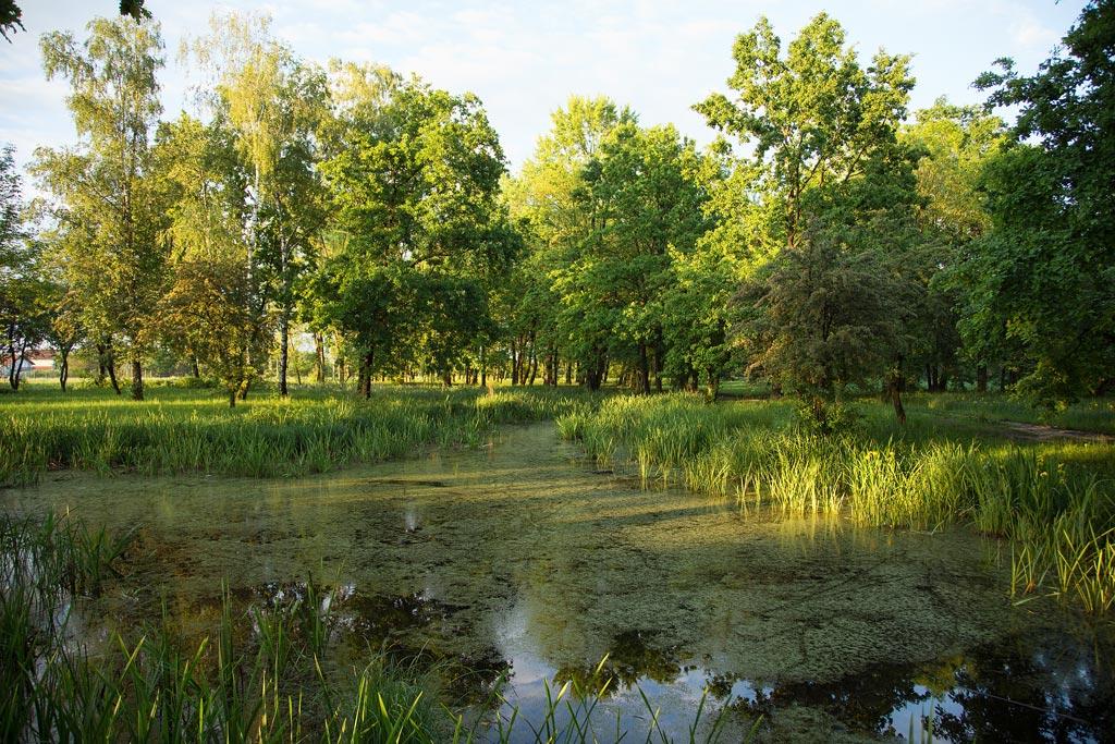 Močvare... - Page 35 Zelenilo-drve%C4%87e-%C5%A1uma-voda-komarci-%C5%BEabe-%C5%A1a%C5%A1