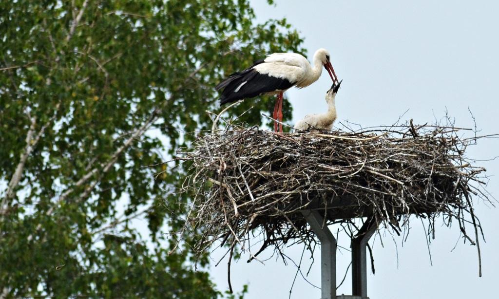 hranjenje ptica - mala foto JU Zeleni prsten