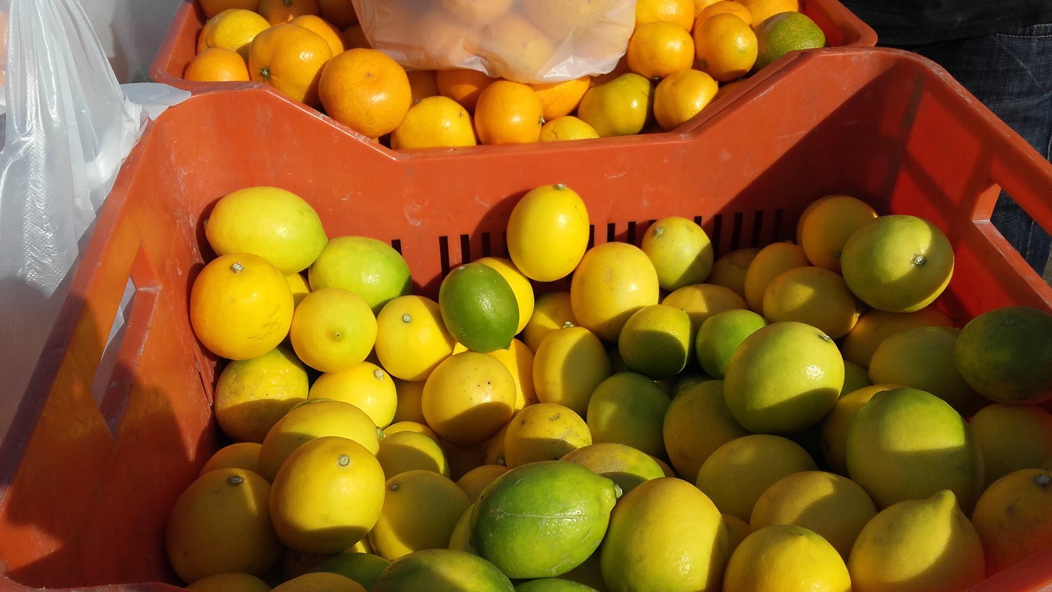 mandarine-3